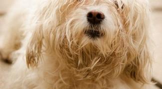 Чем нельзя кормить собак