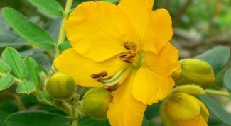 Как проводить очищения кишечника сенной