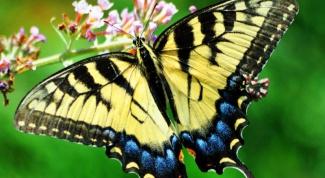 Что символизирует бабочка