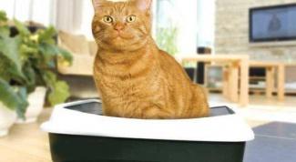 Чем заменить наполнитель для кошачьего туалета