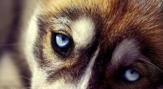 Стоит ли усыплять больную собаку