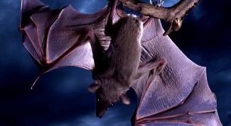 Какие млекопитающие ведут ночной образ жизни?
