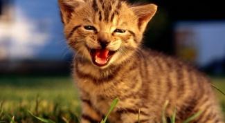 Как мяукают кошки
