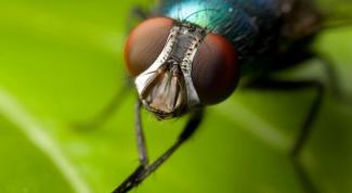 Какие мухи кусаются