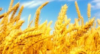 В каком состоянии находится сельское хозяйство в регионах России