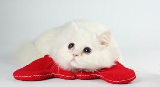 Почему кот гадит в постель