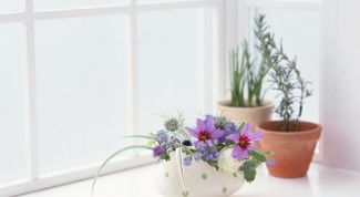 How to water house plants with tea brewing