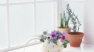 Как поливать домашние растения чайной заваркой