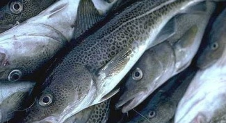 How to distinguish cod from haddock at purchase