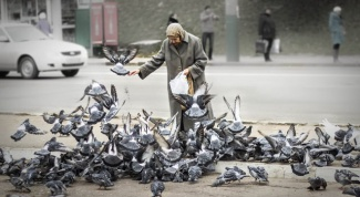 Why not feed the pigeons rye bread