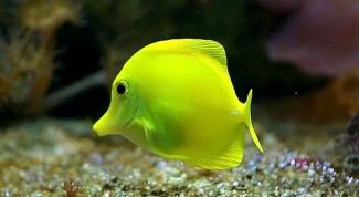 Есть ли сердце у рыбы