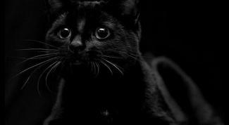 5 самых распространенных мифов о кошках