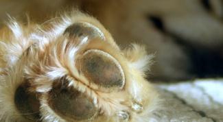 Как подстричь когти собаке