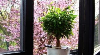 Энергия комнатных цветов в доме