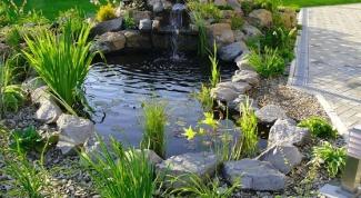Как лучше украсить пруд