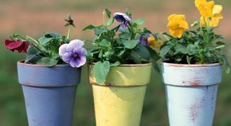 Удобрение для комнатных растений из фруктовой кожуры