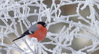 Какая будет зима 2014-2015: прогноз синоптиков