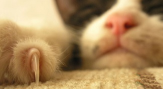 Нужно ли стричь когти кошке