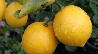 Лимоны для здоровья и красоты