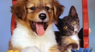 Аллергия на шерсть животных: что делать