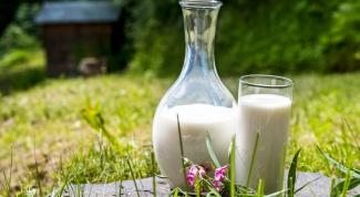 Чем полезно свежее молоко и где его можно купить