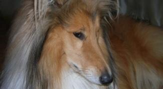 Как взять собаку из приюта - особенности выбора