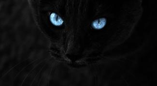 Как кошки видят при плохом освещении