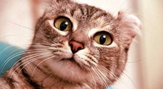 Как промывать кошке глаза