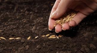 Какие семена считаются капризными