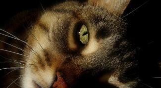 Причины кошачьей депрессии и борьба с ней