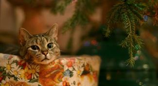 Новый год и домашние животные