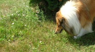 Как научить собаку командам - «Дай», «Лапу», «Фу», «Апорт»
