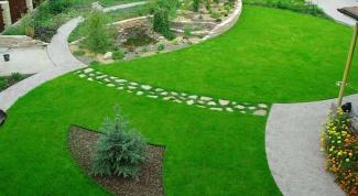 Как организовать изумрудный газон