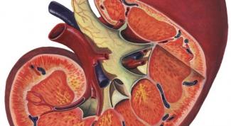 Нефрит: симптомы, лечение, прогноз