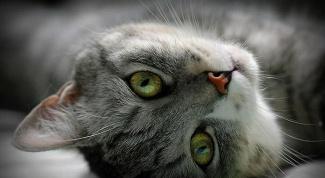 Почему в канонических библейских книгах никогда не упоминаются кошки