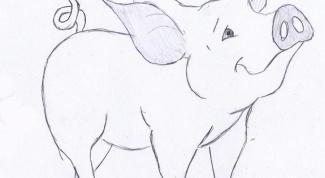 Как нарисовать поросенка поэтапно