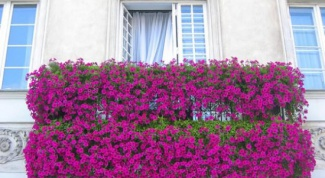5 растений для выращивания на балконе