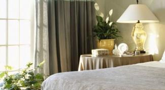 Лучшие комнатные растения для спальни