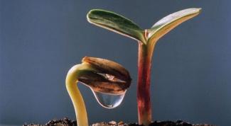 Правила семенного размножения комнатных растений