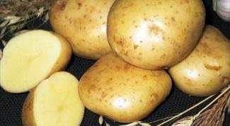 Чем полезна картошка