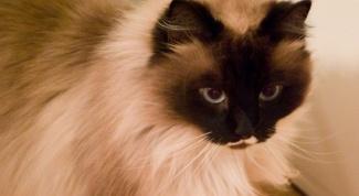 Какие коты и кошки самые ласковые