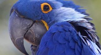 Какие комнатные растения опасны для попугая