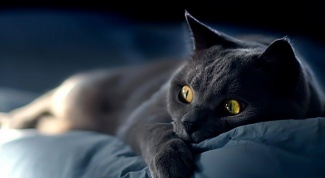 What to do if a sick cat