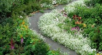 Какие есть бордюрные цветы