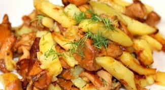 Как пожарить молодую картошку с лисичками