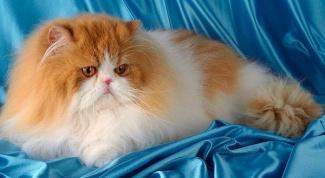 Чем вредна кошачья шерсть в 2018 году