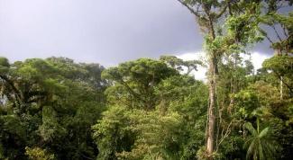 Какие есть животные влажных экваториальных лесов