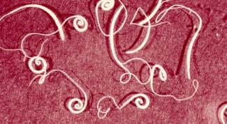 Какие характерные признаки круглых червей