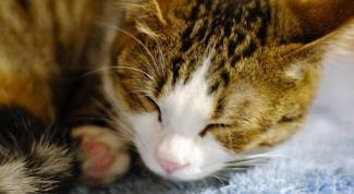 Почему темная моча у кошки