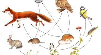What is a food chain in nature